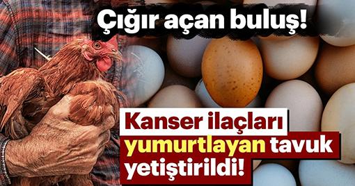 'Kanser İlacı Yumurtlayan' Tavuk