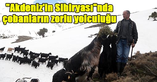 Akdeniz'in Sibiryası'nda Çobanların Zorlu Yolculuğu
